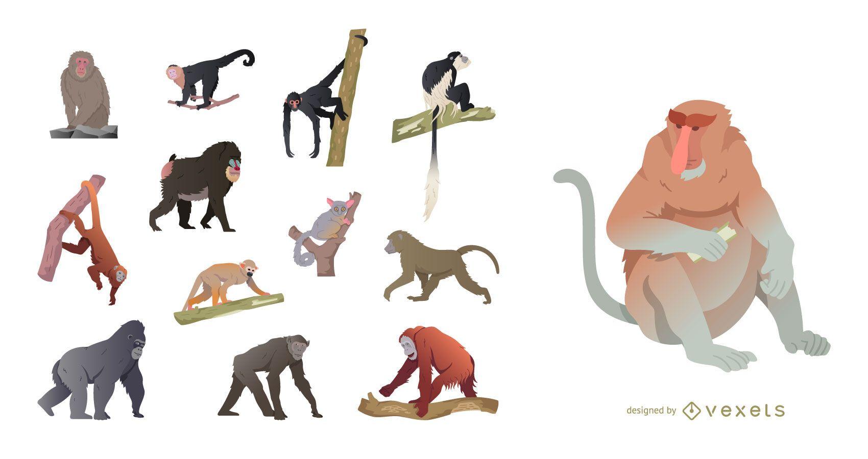 Conjunto de ilustración de especies de monos
