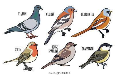 Bird Illustration Design Set