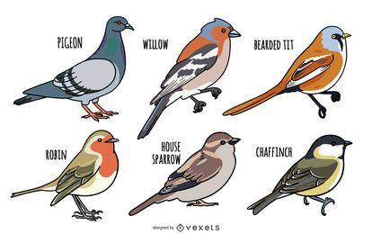 Conjunto de design de ilustração de pássaros