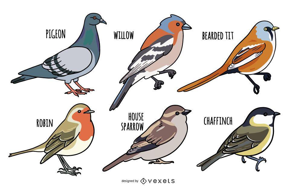 Bird Illustration Design Set