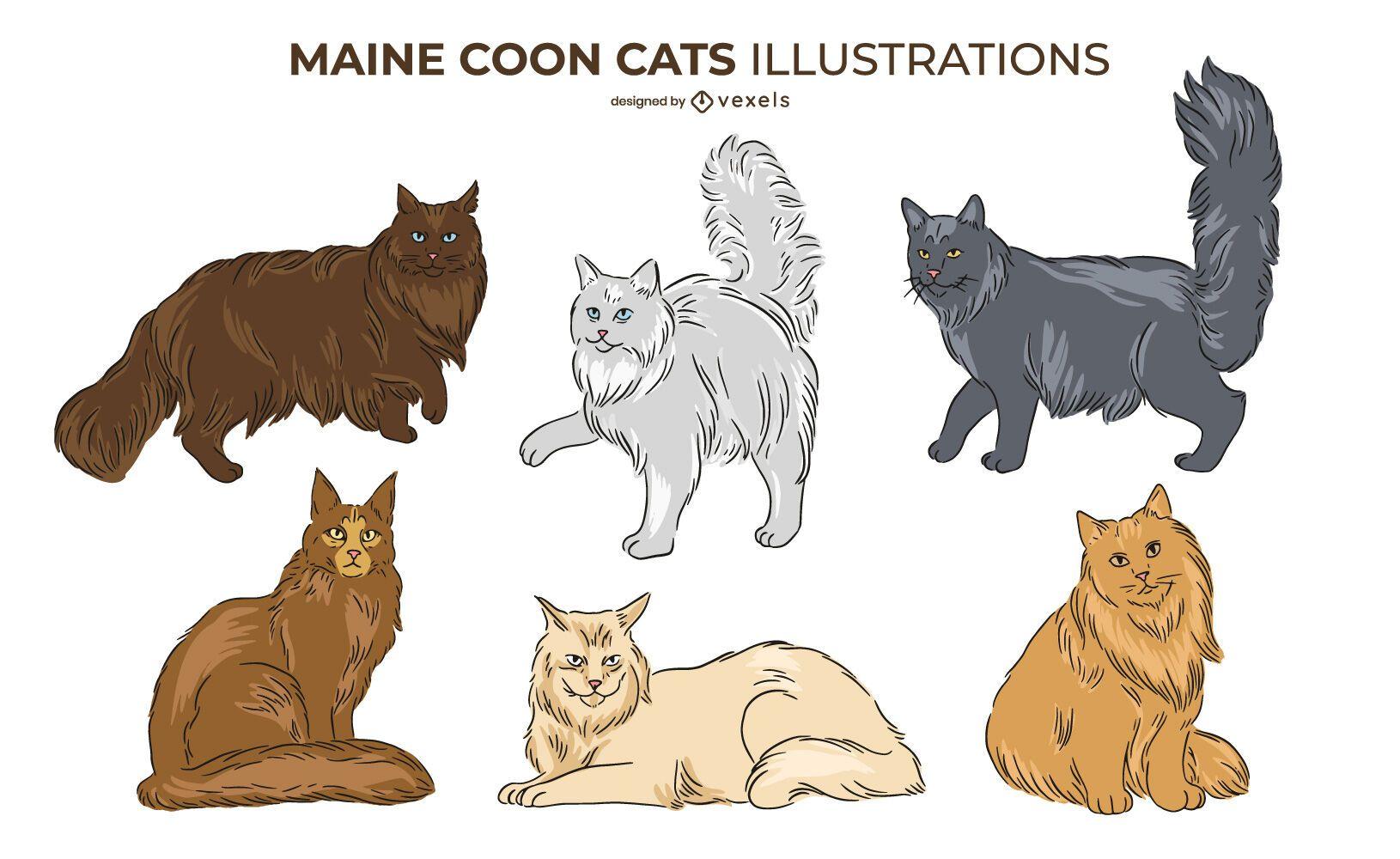 Conjunto de diseño de gato Maine Coon