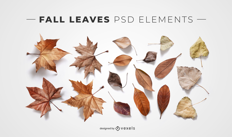 Hojas de otoño elementos psd para maquetas.