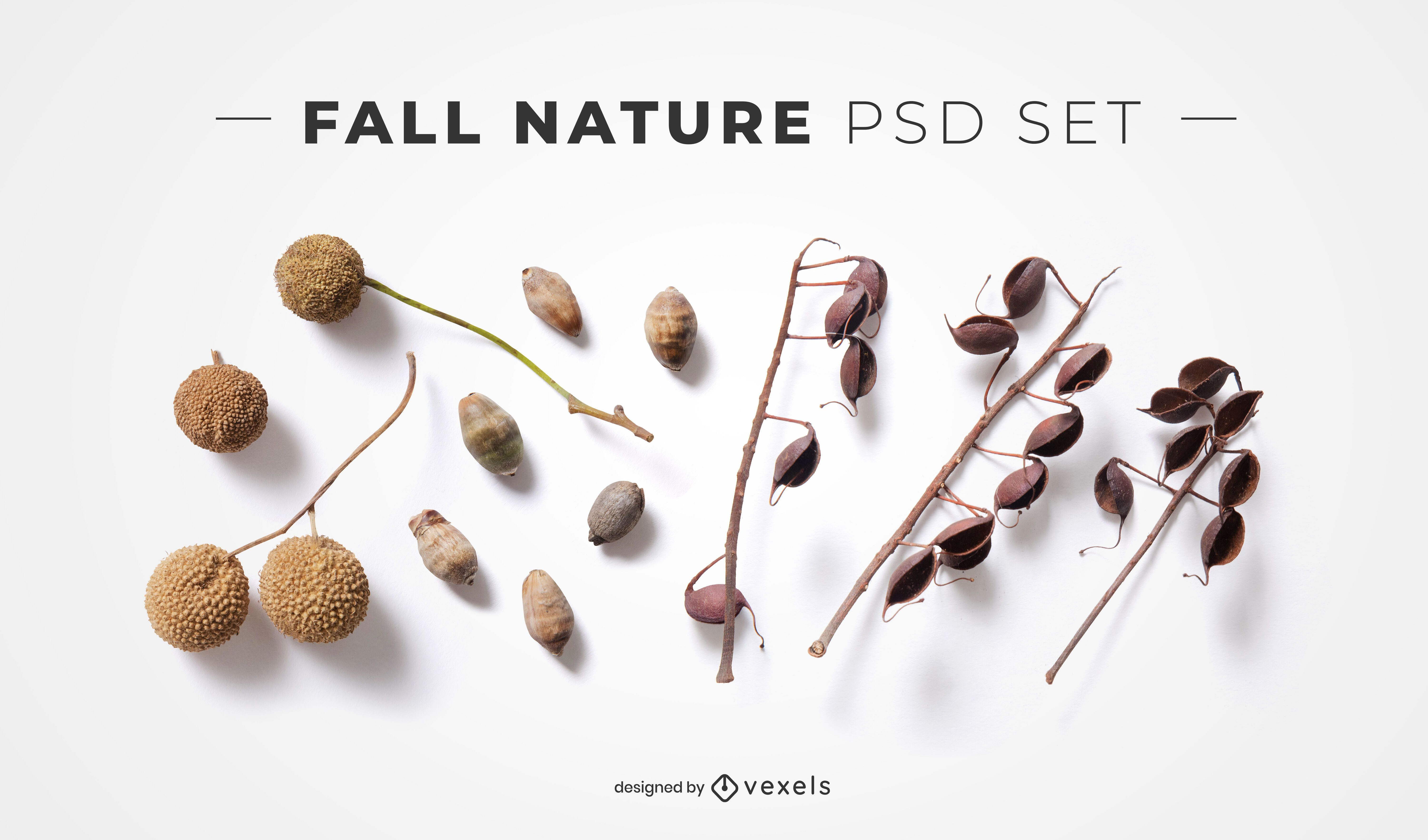Fall twigs psd elements for mockups