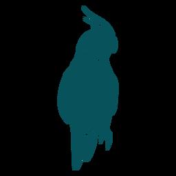 Pájaro loro cockatiel