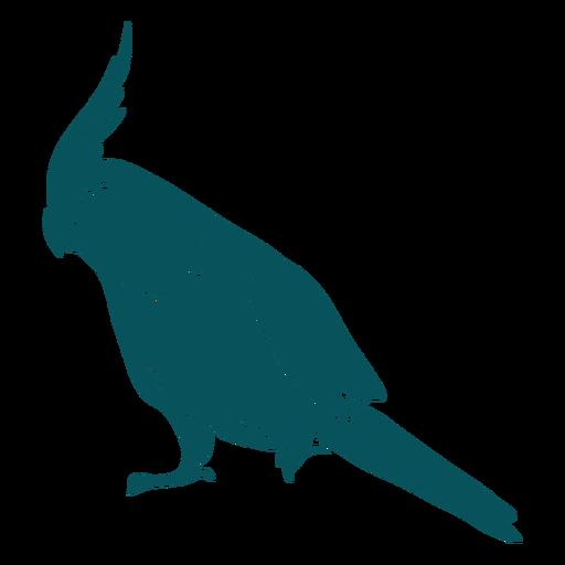 Cockatiel quarrion bird