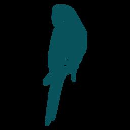 Pájaro loro guacamayo