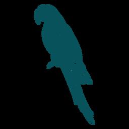 Lado del pájaro del loro guacamayo