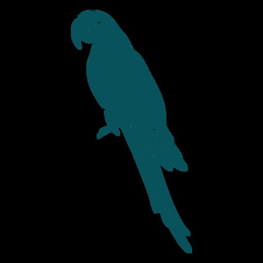 Macaw parrot bird side