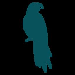 Domestic parrot bird