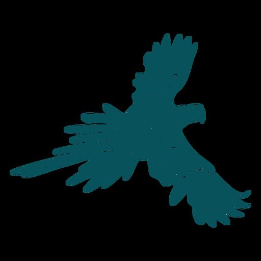Flying parrot bird