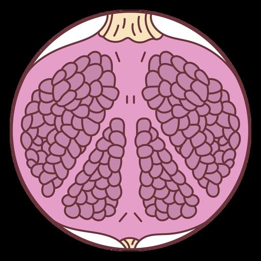 Ilustración de granada de fruta Transparent PNG