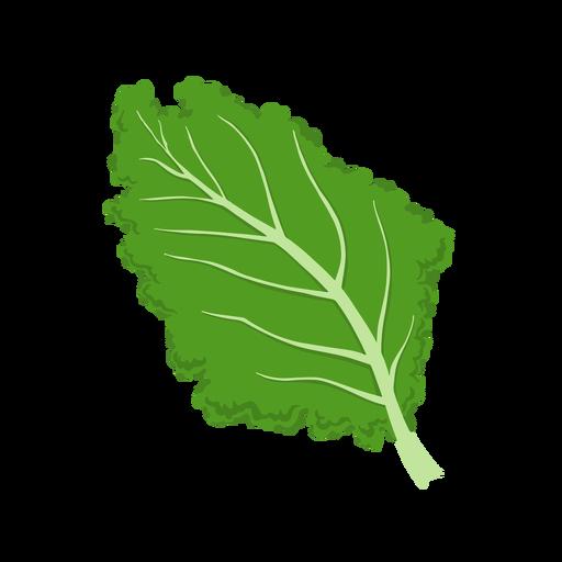 Ilustración de hoja vegetal de col rizada