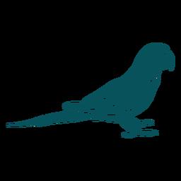 Agapornis loro pájaro