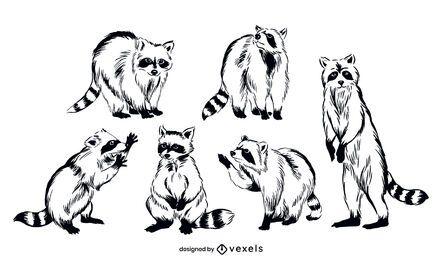 Conjunto de ilustração de animais de guaxinim