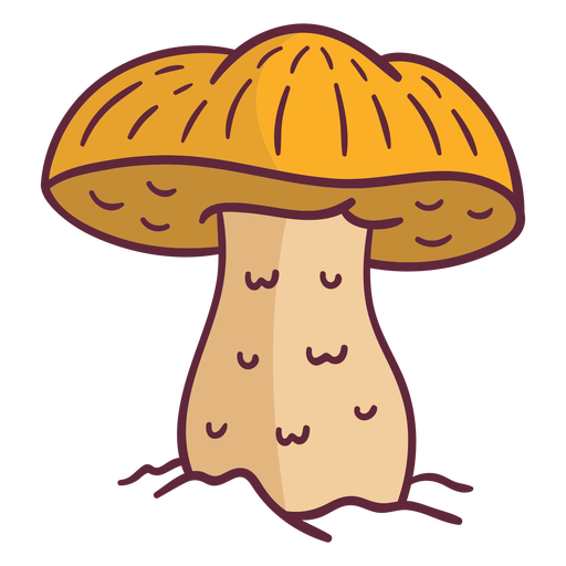 Caesar mushroom fungus illustration