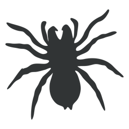 Goliath Vogelspinne Spinnenschattenbild