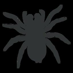 Silueta de araña tarántula goliat