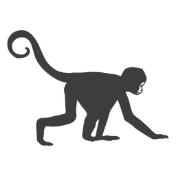 Monkey crawling animal