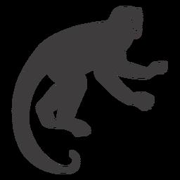 Monkey mammal animal