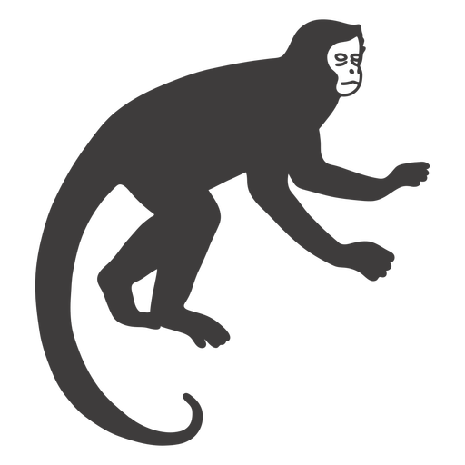 Animal mamífero mono