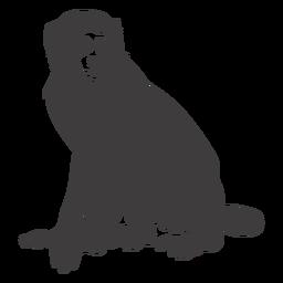 Macaco ainda animal