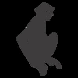 Sitting monkey animal