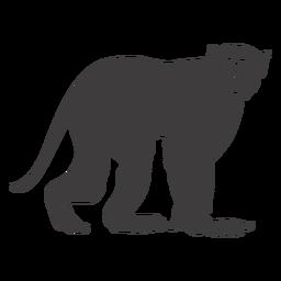 Macaco firme esperando animal