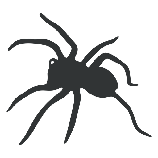 Tarantula spider arachnid silhouette