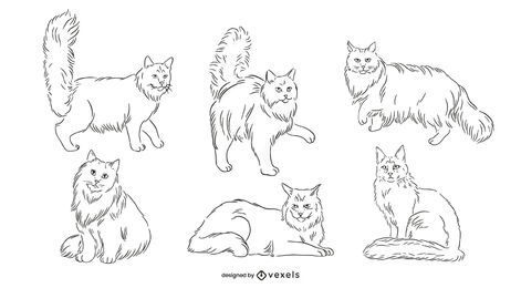 Hand Drawn Maine Coon Cat Pack