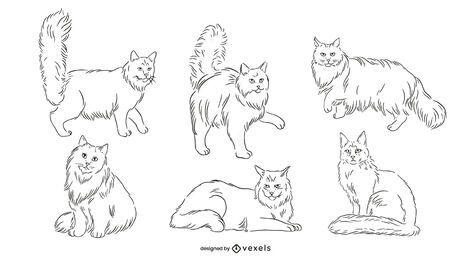 Paquete de gatos Maine Coon dibujados a mano