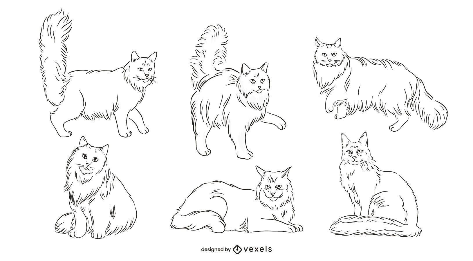 Pacote de gatos Maine Coon desenhado à mão