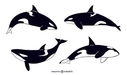 Killer whale illustration set