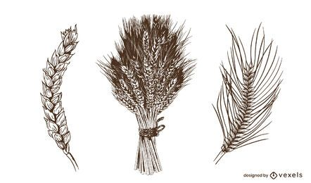 Wheat spikes hand drawn set