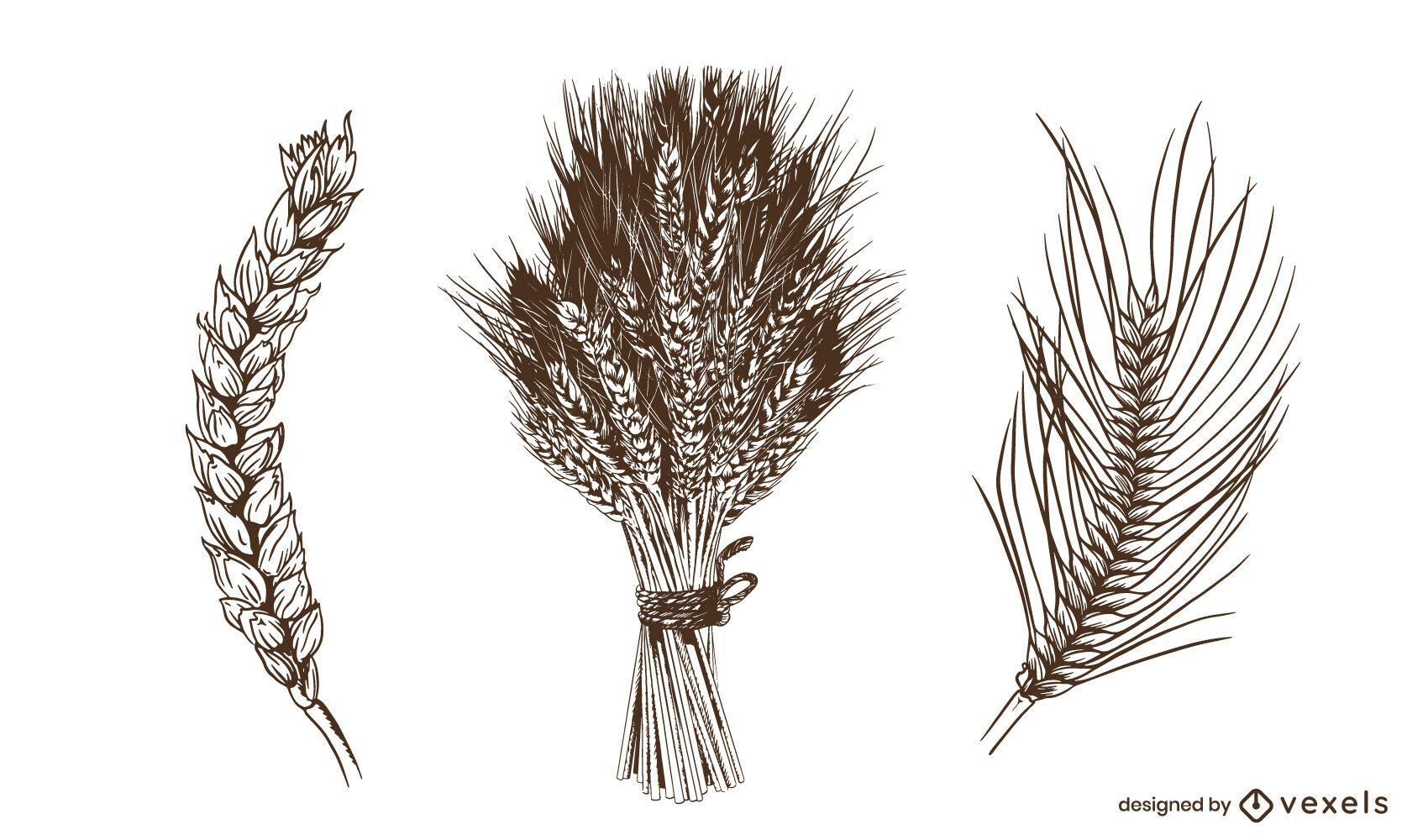 Conjunto de espigas de trigo desenhado à mão