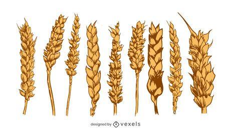 Wheat spikes illustration set