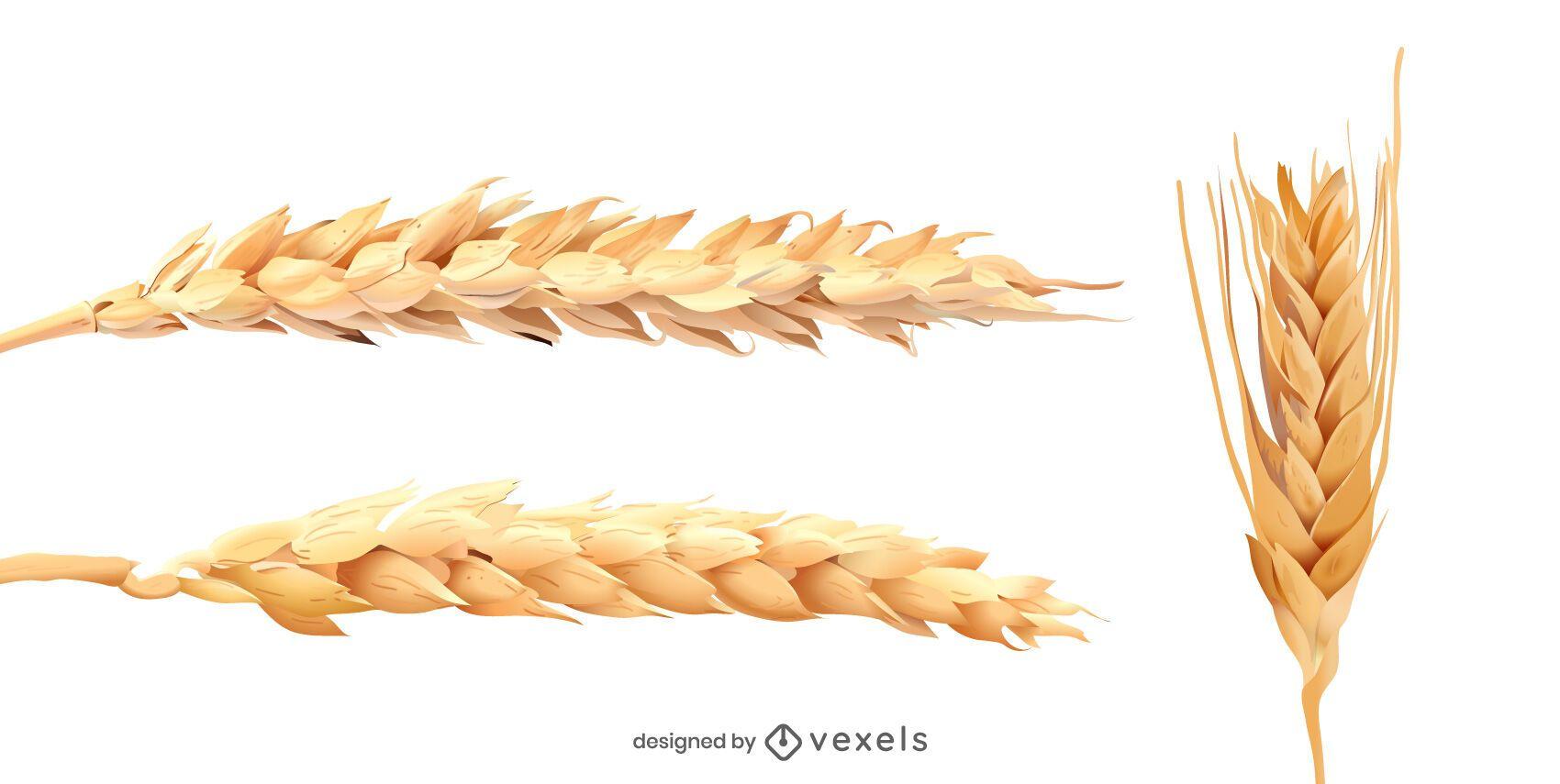 Conjunto realista de espigas de trigo.