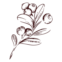 Ramo de cranberries desenhado à mão no Dia de Ação de Graças
