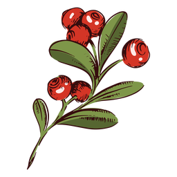 Cranberries branch illustration thanksgiving