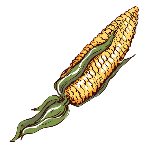 Ilustración de maíz detallada maíz