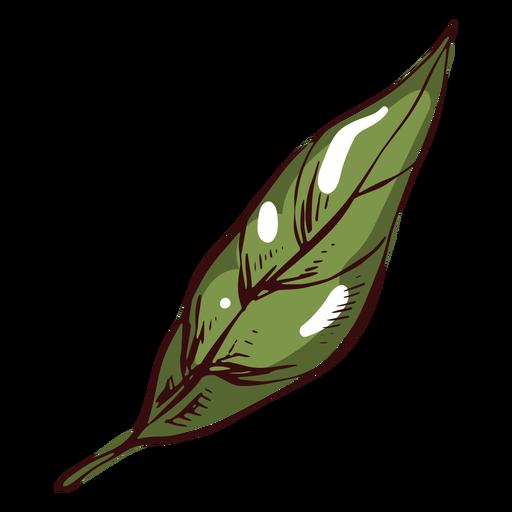 Hoja de ilustración de hoja verde detallada Transparent PNG