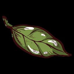 Detailed leaf illustration leaf