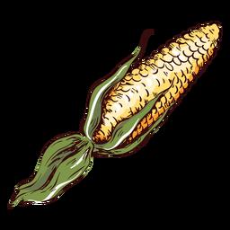 Detailed maize illustration corn