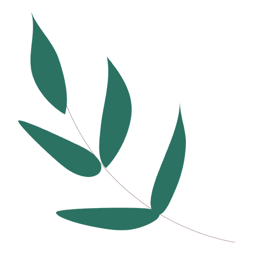 Leaves branch hand drawn leaves hand drawn branch plant plants