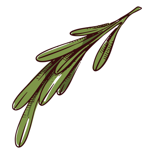 Leaves branch illustration leaves illustration Transparent PNG