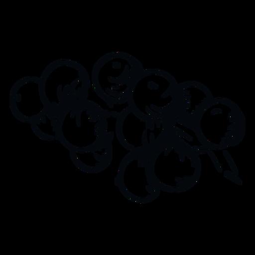 Mistletoe berries black and white mistletoe