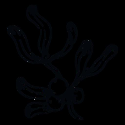 Muérdago bayas rama muérdago blanco y negro Transparent PNG