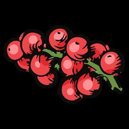 Mistletoe berries illustration mistletoe