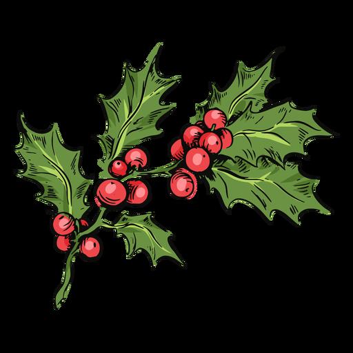Mistletoe branch illustration mistletoe