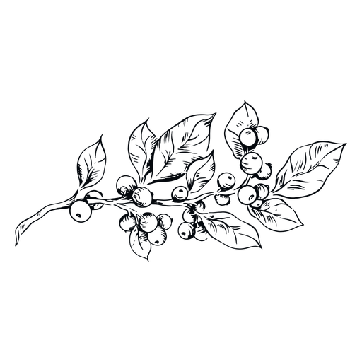 Planta de muérdago negro y blanco ilustración muérdago Transparent PNG