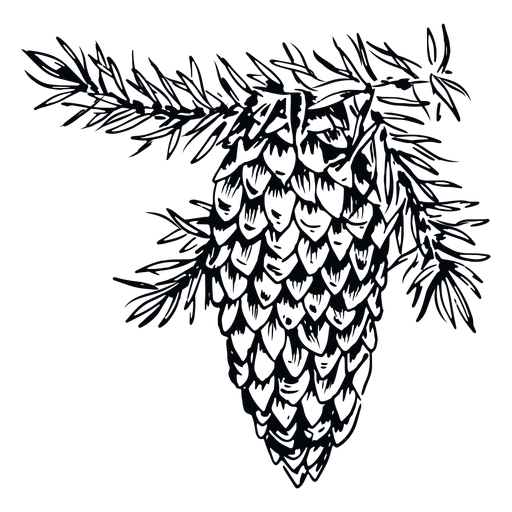 Pinecone black white illustration pinecone